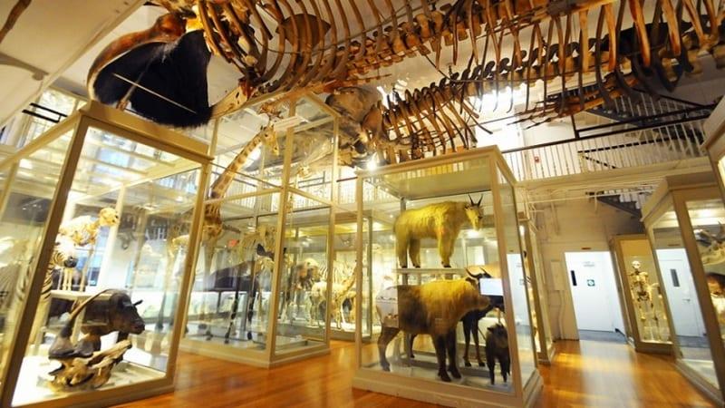 01 Harvard Museum of Natural History (Harvard University)