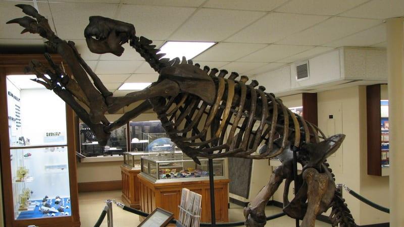 04 Orton Geological Museum