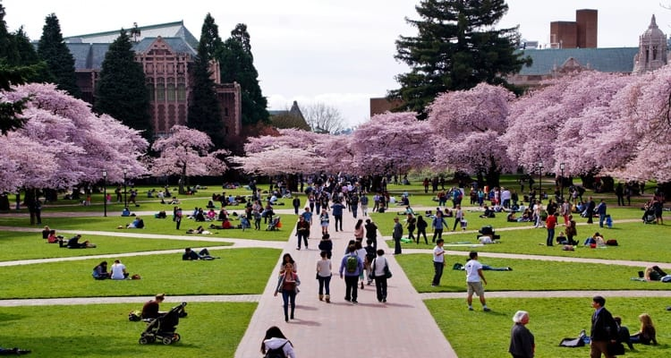 university-of-washington-quad